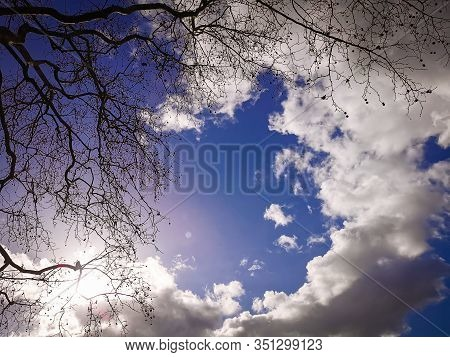 Bright Blue Sky With Clouds, Bare Tree And Sunset Lights, Background For Design, Decoration Or Wallp