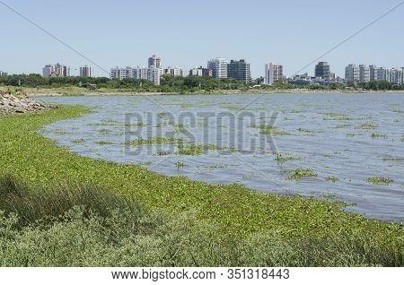 Riverbank Of The Rio De La Plata River, Abundant Aquatic Plants And View Of The Vicente Lopez Coast