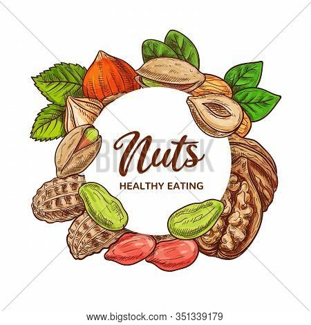 Nuts And Legume Beans Vector Sketch Of Food Design. Peanut, Almond And Pistachio, Hazelnut, Walnut A