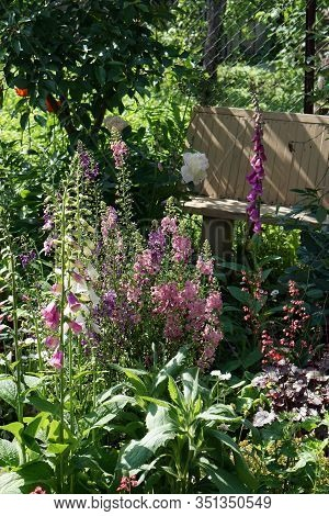 Mullein And Digitalis  Blooming  Flowers Brunch   In Garden  With Copy Space In Minimal Style, Templ
