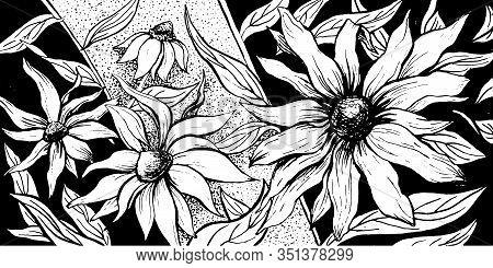 Flowers Floral Horizontal Background, Echinacea Blossom Ornate Floral Decoration Vintage Art Design.