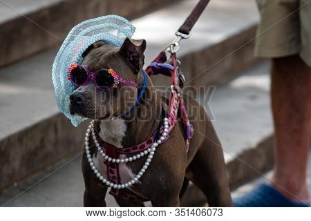 New York, Usa - June 23, 2019: Dog With Black Glasses And Hat Helps Visually Impaired People To Coll