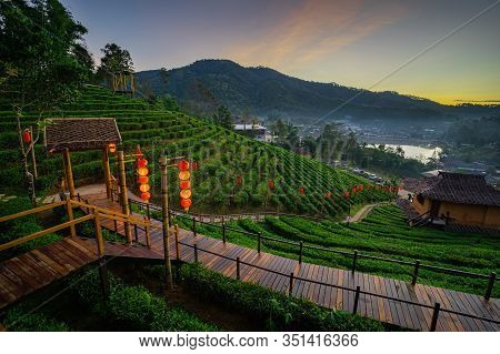 The Tea Plantation On Nature In The Morning Fresh Air Mountains Sunlight And Flare Background Concep