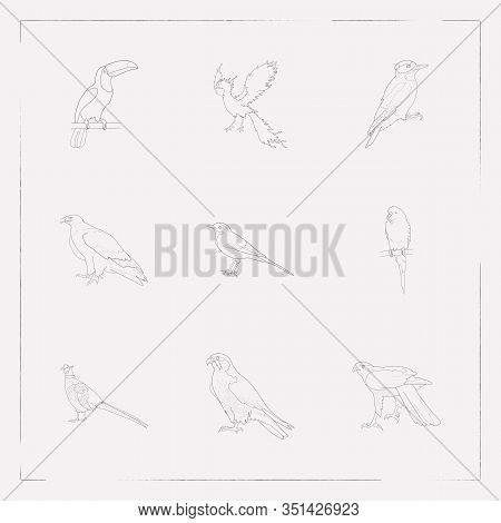 Set Of Ornithology Icons Line Style Symbols With Eagle, Falcon, Woodpecker And Other Icons For Your