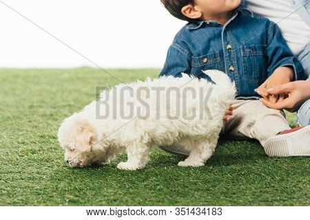 Cropped View Of Mother And Son Holding Hands And Havanese Puppy Smelling Grass Isolated On White