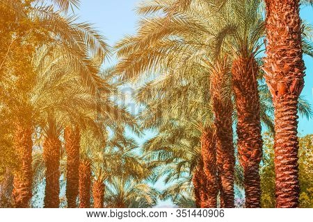 Tropic Palm Alley Way Landscape Park Outdoor Nature Scenic View Vivid Colorful Foliage And Blue Sky
