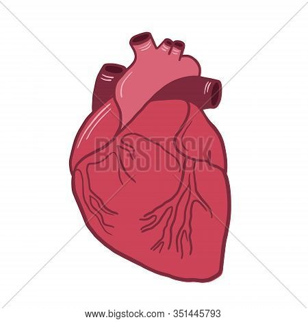 Anatomical Heart. Vector Color Illustration Of A Heart. Anatomical Illustration. Freehand Drawing In