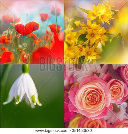Different flowers collection.Spring theme set.