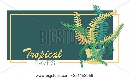 Fern.tropical Leaves. Vector Isolated Fern Flower On A White Background. Decorative Indoor Plant In