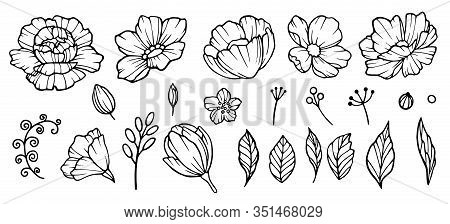 Peonies Hand Drawn Element. Floral Garden Sketch Of Flowers Bud And Leaves Vector Collection Of Peon