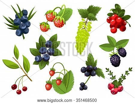 Set Of Hand Drawn Branchs Currant, Grapes, Blueberry, Strawberry, Cherry, Bramble, Cranberry, Berrie