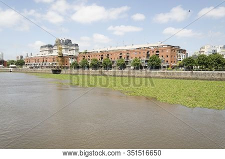 Unusual View Of Puerto Madero: Water Surface Covered By Common Water Hyacinth, Eichhornia Crassipes,