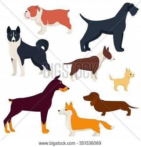 Set Of Different Breeds Dogs. Purebred Dogs. Corgi, Doberman, Dachshund, Laika, Etc. Flat Vector Ill