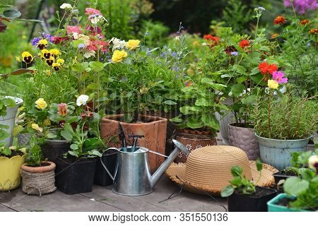 Blooming Flowers In Pots With Watering Can And Straw Hat On Wooden Patio In The Garden. Vintage Bota