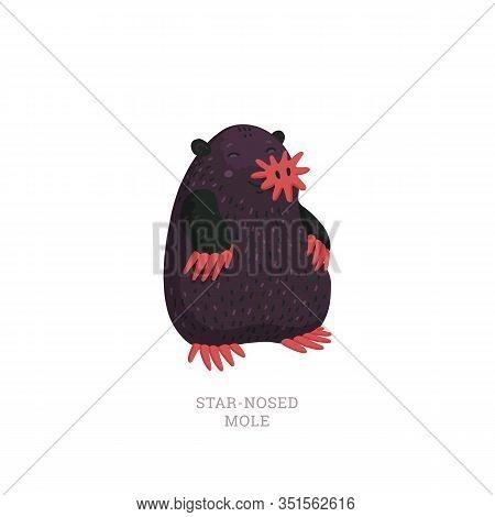 Rare Animals Collection. Star-nosed Mole, Condylura Cristata. North American Mole With Sensitive Sta