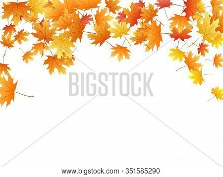Maple Leaves Vector Background, Autumn Foliage On White Graphic Design. Canadian Symbol Maple Red Ye