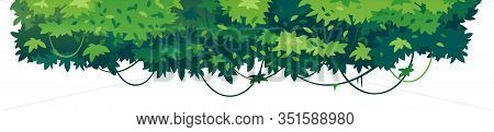 Green Leaves Of Tropical Trees With Lianas Placed On Top Isolated, Decorative Composition Of Sample