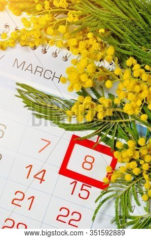 8 March postcard - mimosa flowers branch over the calendar with framed 8 March date. 8 March composition. Festive 8 March still life