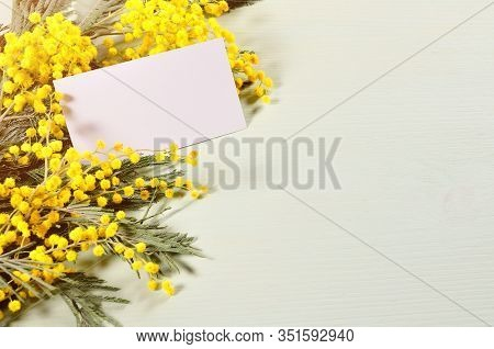 Spring background - spring mimosa flowers and blank card with free space for text. Colorful spring background, spring card, spring still life with spring mimosa flowers