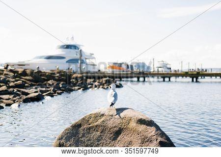 Kirkland, Washington, Usa. February 2020. The Waterfront Of Lake Washington In Clear Weather. A Seag