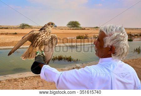 Doha ,Qatar -December 26 , 2019 : man preparing his falcon bird for Falconry hunt national sport of Qatar