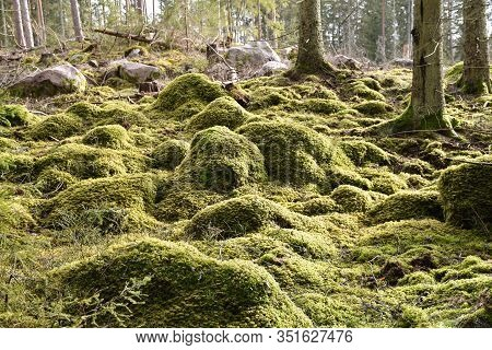 Close Up Of A Stony  Green Mossy Forest Ground