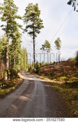 Curvy Gravel Road Through A Bright Coniferuous Forest