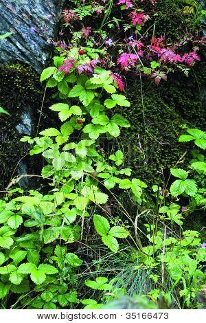 Stone wall - Plant