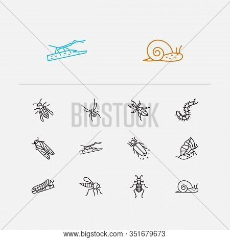 Beetle Icons Set. Cicada And Beetle Icons With Robber Fly, Stickbug And Black Widow Spider. Set Of S