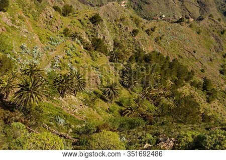 Green Slopes Falling Over The Valley In The Mist Of The Summit In La Gomera. April 15, 2019. La Gome
