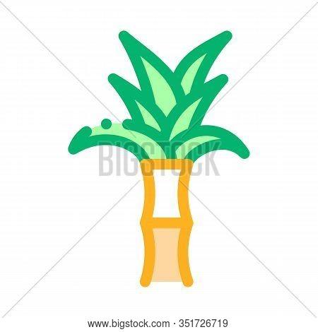 Sugar Cane Plant Icon Vector. Outline Sugar Cane Plant Sign. Isolated Contour Symbol Illustration