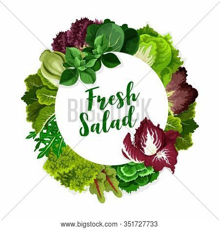 Salad Greens Or Leaf Vegetables Vector Icon Of Fresh Leafy Plant Food. Lettuce, Spinach And Kale, Wa