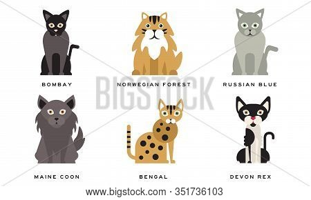 Collection Of Different Cats Breeds, Bombay, Norwegian Forest, Russian Blue, Maine Coon, Bengal, Dev