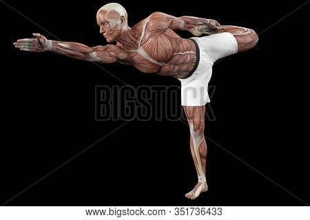 Muscular Manin A Defense Pose View Anatomical Vision. 3d Illustration. Medical Vision Of The Structu
