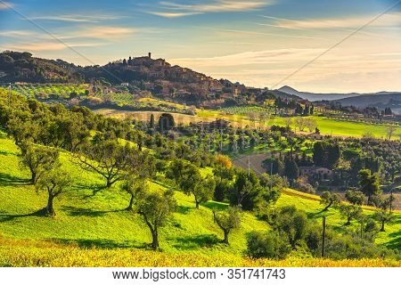 Casale Marittimo Village, Olive Trees Countryside Landscape In Maremma. Pisa Tuscany, Italy Europe.