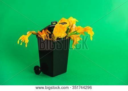 Trash Can With Wilted Narcissus Flowers