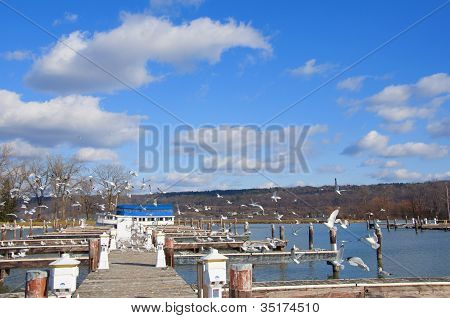 Finger Lakes Marina