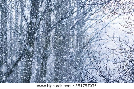 Snowing Landscape, Winter Holiday Concept - Fairytale Fluffy Snow-covered Trees Branches, Nature Sce