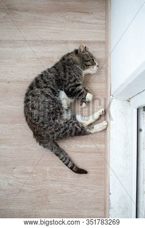 Adorable Aged Cat Resting On Floor At Home