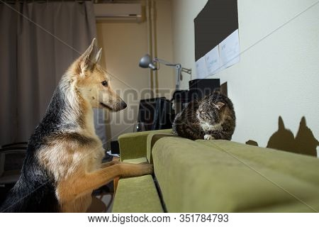 Playful Dog Acquainting With Old Cat At Home
