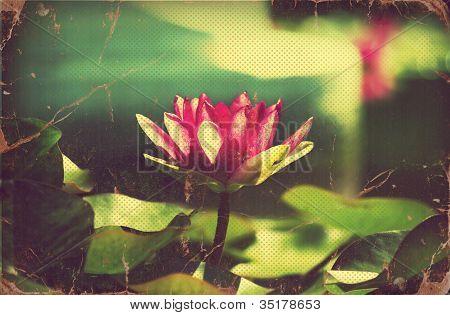 Waterlily In Pond .vintage Flowers Card On Old Paper