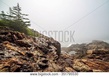 Foggy Rocky Ocean Coastline With Pines In Acadia National Park, Maine, Usa