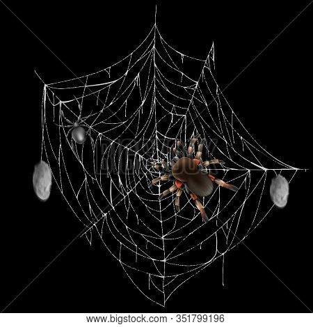 Poisonous Spiders On Web Lace With Hunted And Wrapped Preys 3d Realistic Isolated On Black Backgroun
