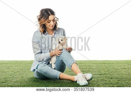 Woman Sitting On Grass And Looking At Havanese Puppy Isolated On White