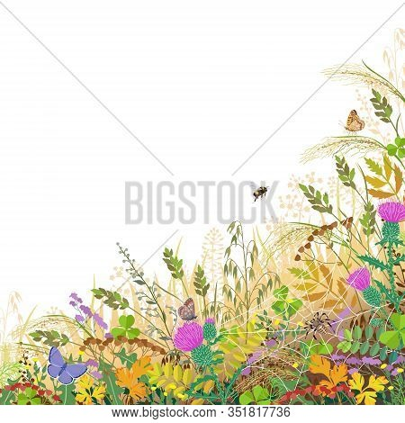 Colorful Border With Autumn Meadow Plants And Insects. Floral Background With Fading Grass, Wild Flo