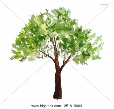 Hand Drawn Watercolor Illustration Of Green Summer Spring Tree Lush Foliage With Brown Trunk. Painte