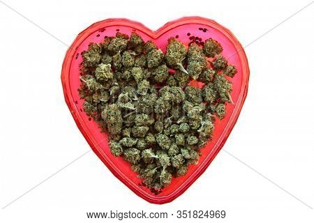Marijuana. Heart shape bud bowl with cannabis buds. April 20th AKA 4:20 celebration with Marijuana in a red Valentines Day Heart Shaped dish. Isolated on white. Room for text. Clipping Path. Cannabis.