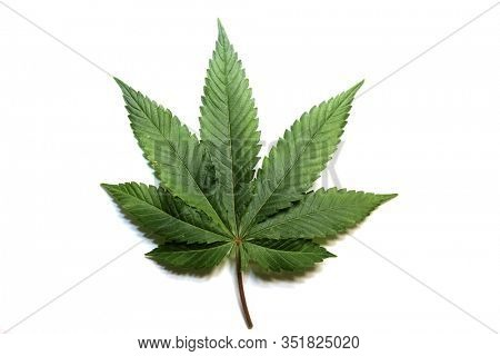 Marijuana Leaf. Cannabis Leaf. Pot Leaf. Isolated on white. Clipping Path. Room for text. Marijuana is legal in many of the United States and enjoyed both Medically and Recreational by millions.