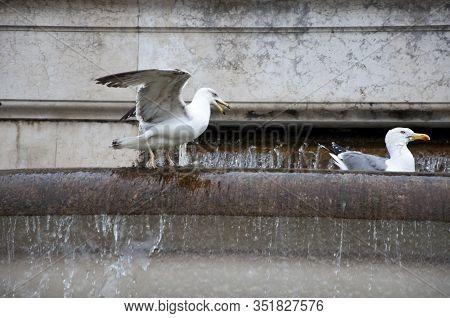 Local Inhabitants. Sea Gulls On Ancient Fountain. Gull Birds On Monumental Fountain. Seagulls And Wa