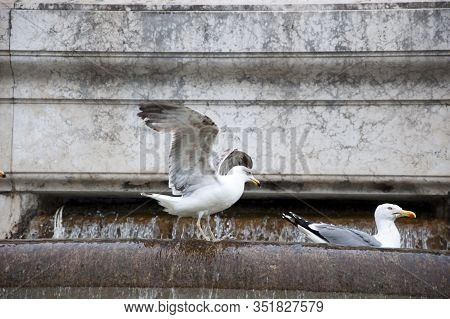 Gull Birds On Monumental Fountain. Seagulls And Water Spouting Into Stone Basin. Architectural Water